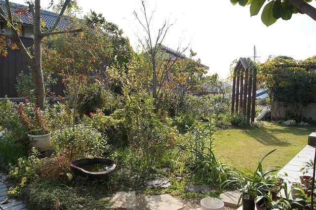 晩秋の風の通る庭_e0181373_22194779.jpg