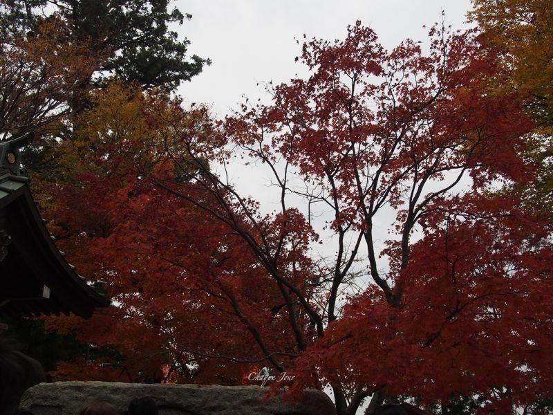 高尾山紅葉… !_d0266681_11332230.jpg