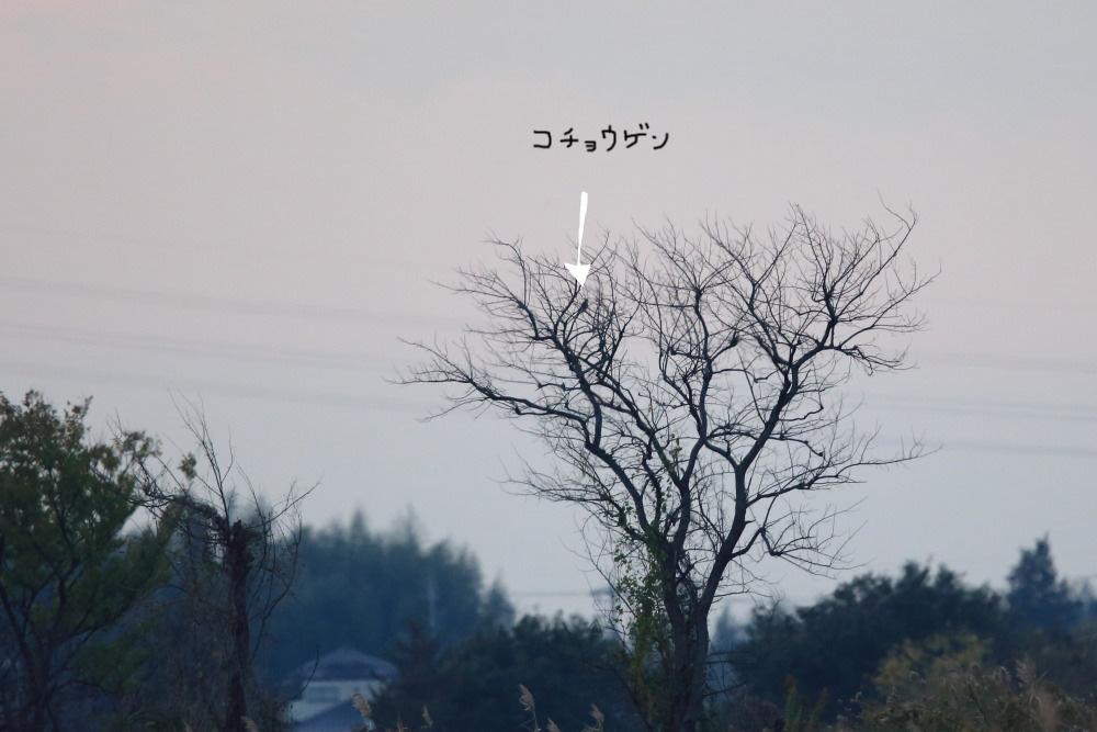 a0183690_20131984.jpg