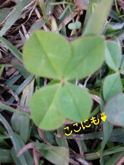 りくちゃんと四つ葉のクローバー_f0186096_1083356.jpg