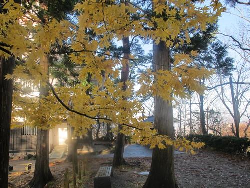 晩秋、千秋公園の紅葉・黄葉・落葉のルクス(lux)・・・その13_c0075701_21553040.jpg