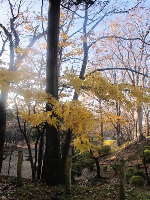 晩秋、千秋公園の紅葉・黄葉・落葉のルクス(lux)・・・その13_c0075701_21553622.jpg