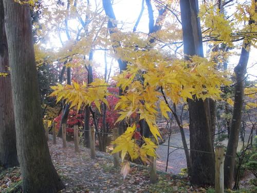 晩秋、千秋公園の紅葉・黄葉・落葉のルクス(lux)・・・その13_c0075701_2156491.jpg