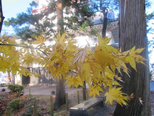 晩秋、千秋公園の紅葉・黄葉・落葉のルクス(lux)・・・その14_c0075701_2273785.jpg