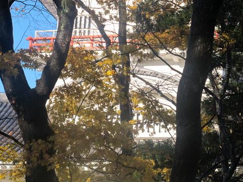 晩秋、千秋公園の紅葉・黄葉・落葉のルクス(lux)・・・その14_c0075701_2274977.jpg