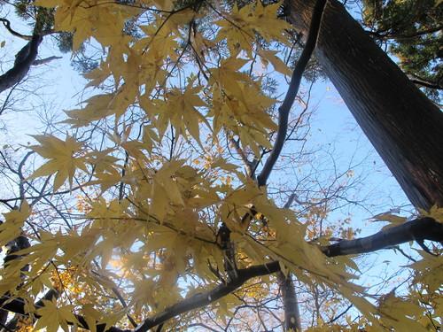 晩秋、千秋公園の紅葉・黄葉・落葉のルクス(lux)・・・その14_c0075701_228012.jpg