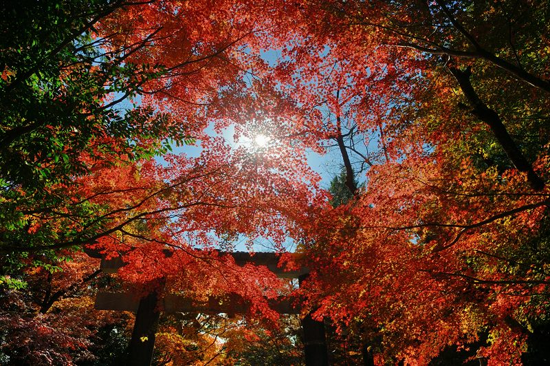 2013京都の紅葉!・大原野神社_f0032011_19421787.jpg