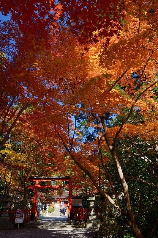 2013京都の紅葉!・大原野神社_f0032011_19442427.jpg