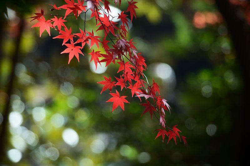 2013京都の紅葉!・大原野神社_f0032011_1944261.jpg
