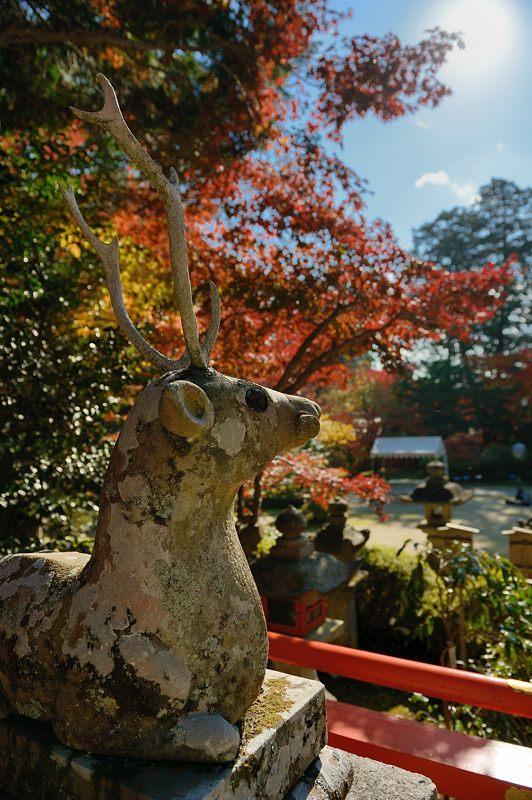 2013京都の紅葉!・大原野神社_f0032011_19451057.jpg
