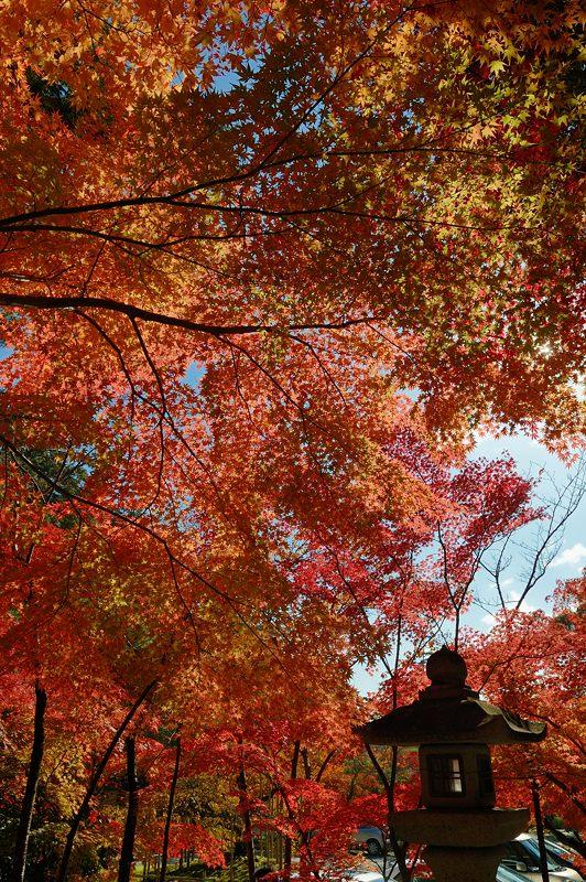 2013京都の紅葉!・大原野神社_f0032011_19461799.jpg