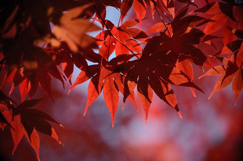2013京都の紅葉!・大原野神社_f0032011_19463989.jpg