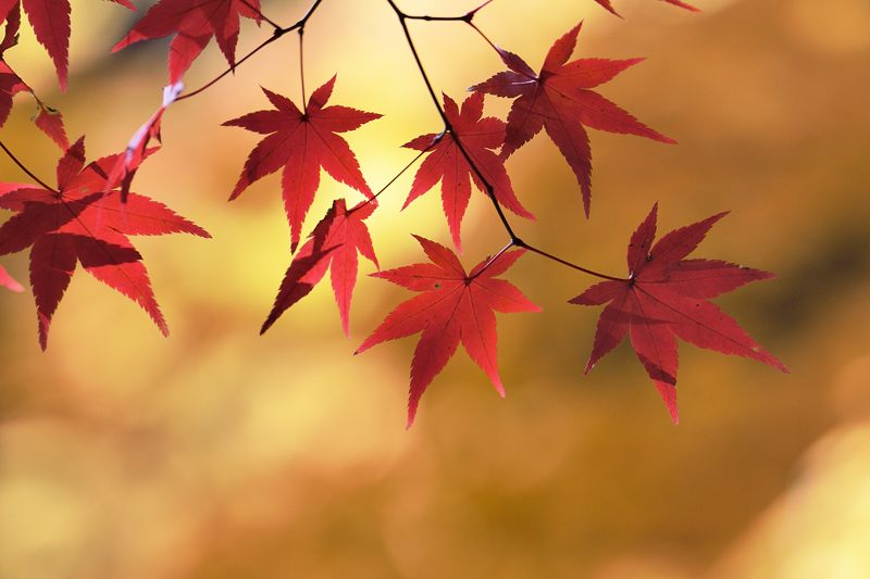 2013京都の紅葉!・大原野神社_f0032011_205825.jpg