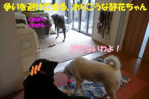 f0121712_1784060.jpg