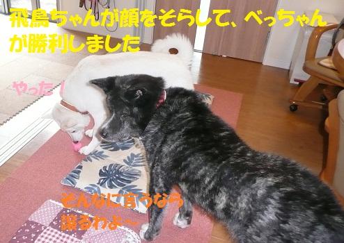f0121712_1784717.jpg