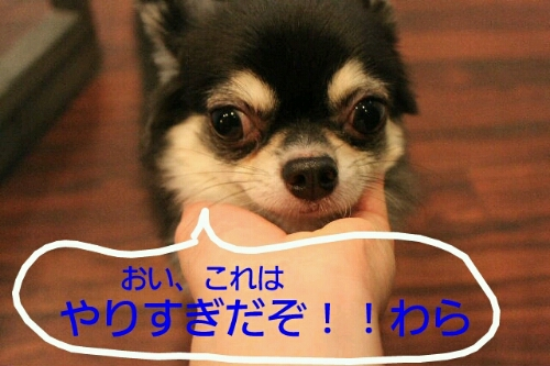 b0130018_23173654.jpg