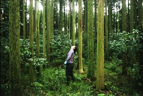 きらめ樹☆_b0212922_104916.jpg