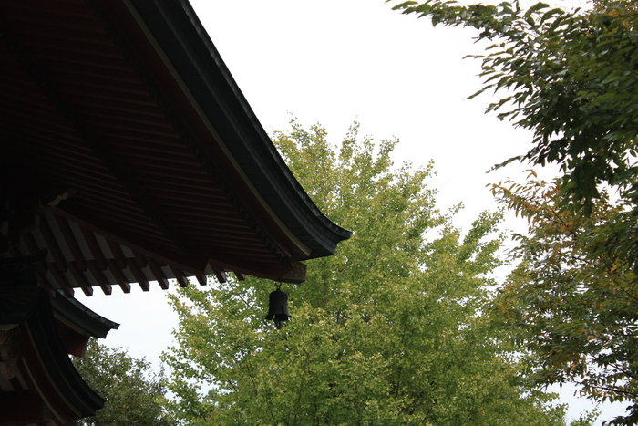 明王院 to お寺の花」  2。_a0214329_6571084.jpg