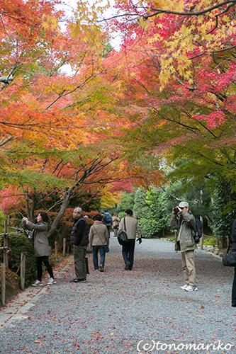 秋色の京さんぽ「龍安寺」_c0024345_11344030.jpg