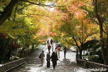 秋色の京さんぽ「龍安寺」_c0024345_1134952.jpg
