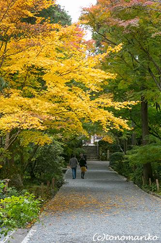 秋色の京さんぽ「龍安寺」_c0024345_1135458.jpg