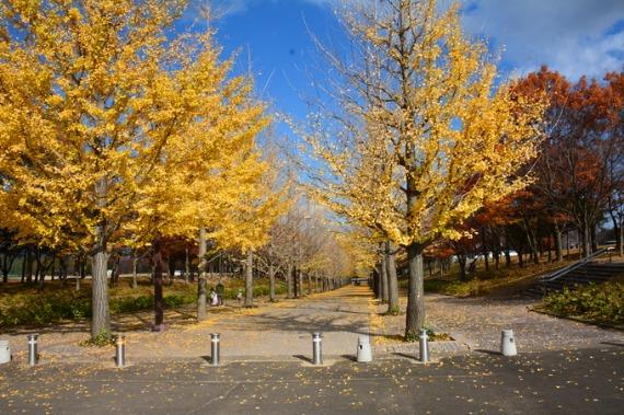 あずま公園_b0249247_1712580.jpg
