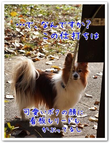 d0013149_22491493.jpg
