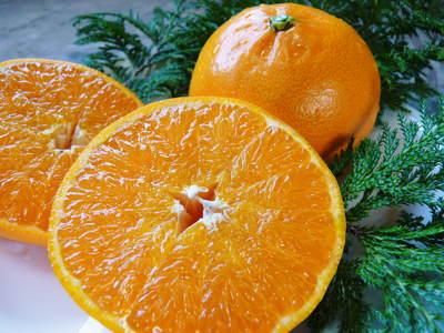 究極の柑橘「せとか」 寒さを感じさせることで色付いていくんです_a0254656_17514741.jpg