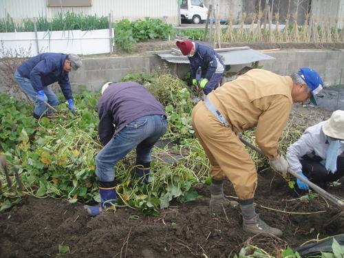 サツマイモ掘り&イベント準備_c0108460_17585275.jpg