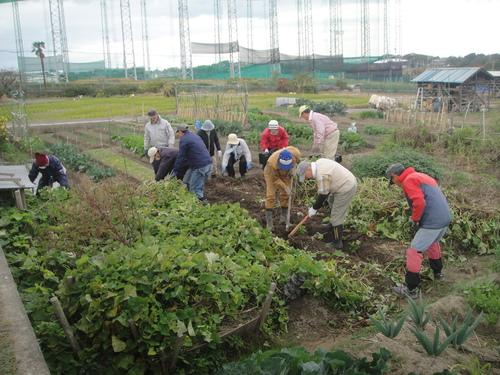 サツマイモ掘り&イベント準備_c0108460_1758827.jpg