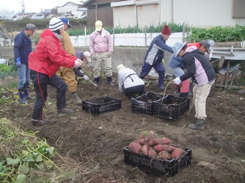 サツマイモ掘り&イベント準備_c0108460_17592530.jpg