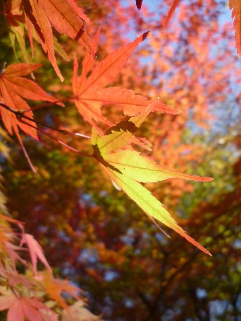 亀の井別荘。。。健太郎さんのお招きで。。。錦秋の湯布院へ。。。。☆⊹⊱..☆*:.。.☆*†_a0053662_14543584.jpg