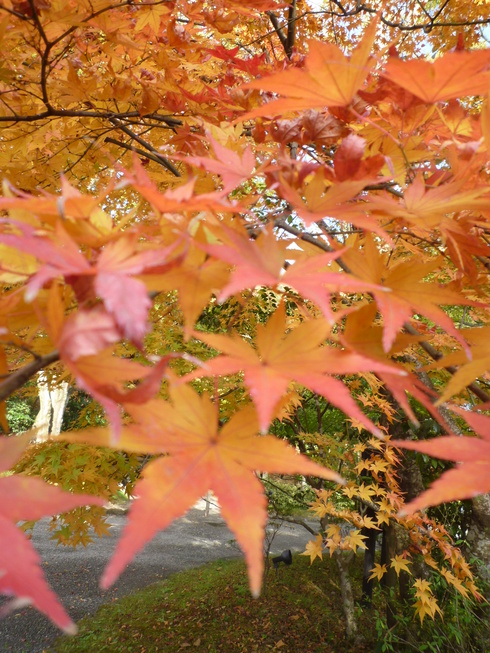 亀の井別荘。。。健太郎さんのお招きで。。。錦秋の湯布院へ。。。。☆⊹⊱..☆*:.。.☆*†_a0053662_14592770.jpg