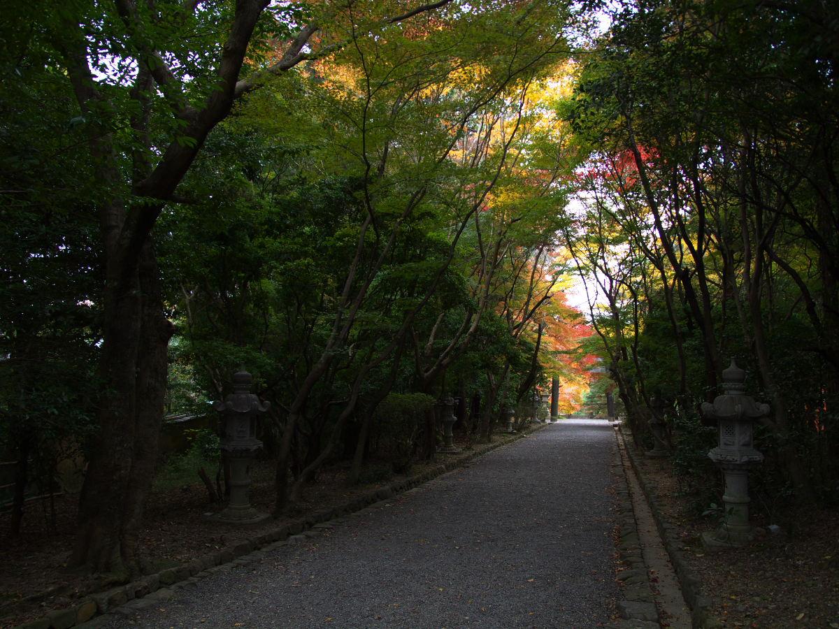 紅葉 2013 <大原野神社>        _f0021869_23491449.jpg