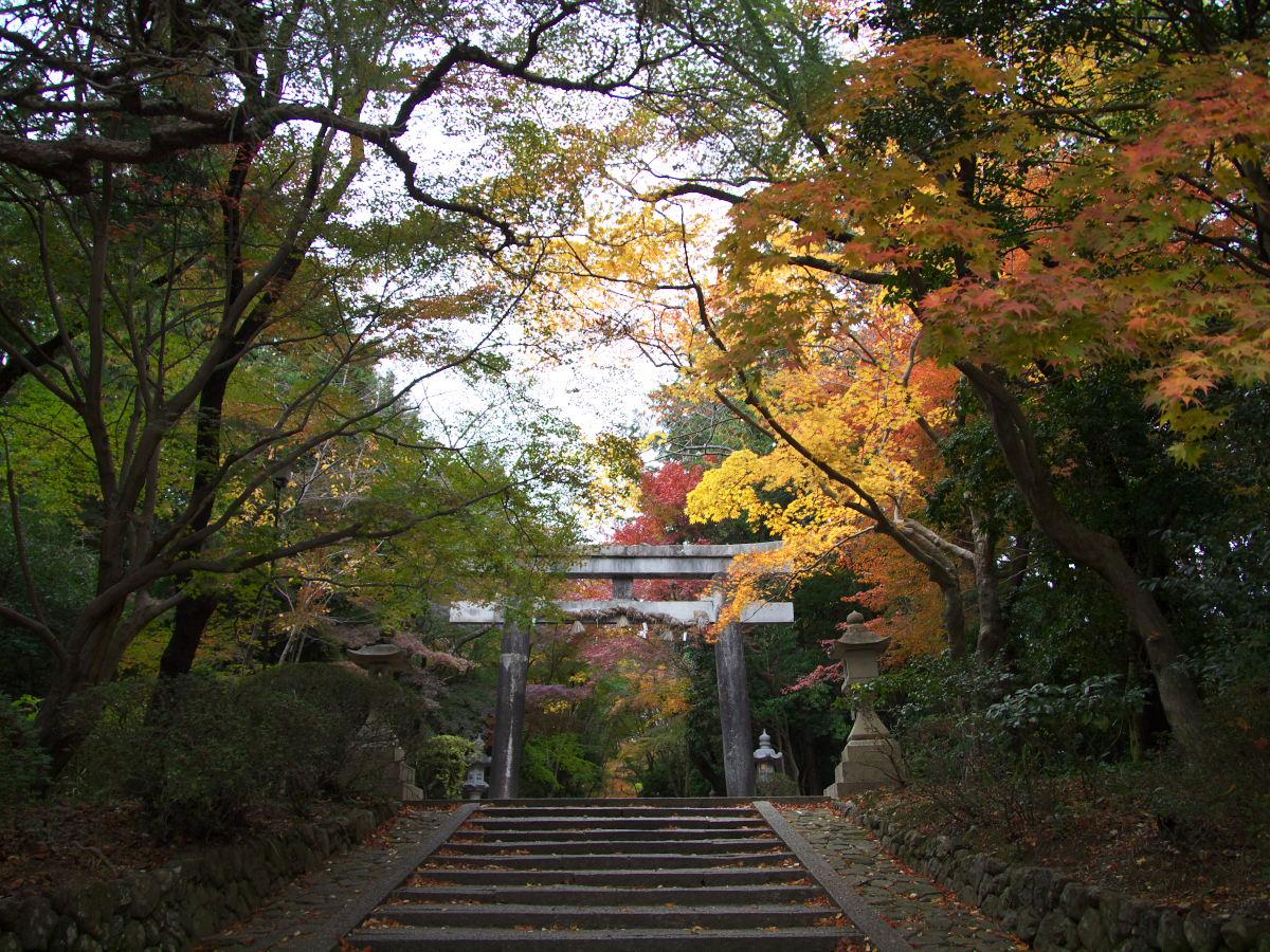 紅葉 2013 <大原野神社>        _f0021869_2350868.jpg