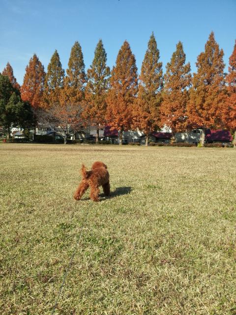 散歩 11月27日_e0215179_13303377.jpg
