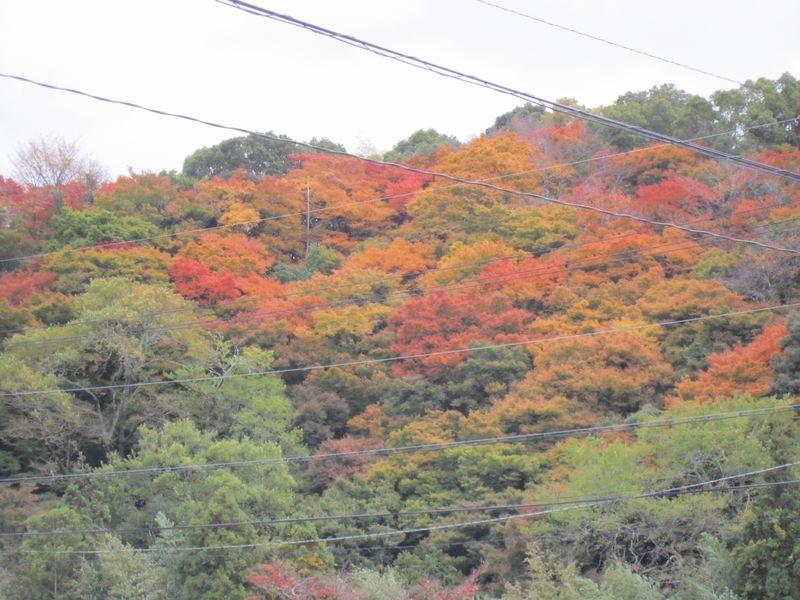 紅葉   by   (ナベサダ)_f0053885_20363687.jpg