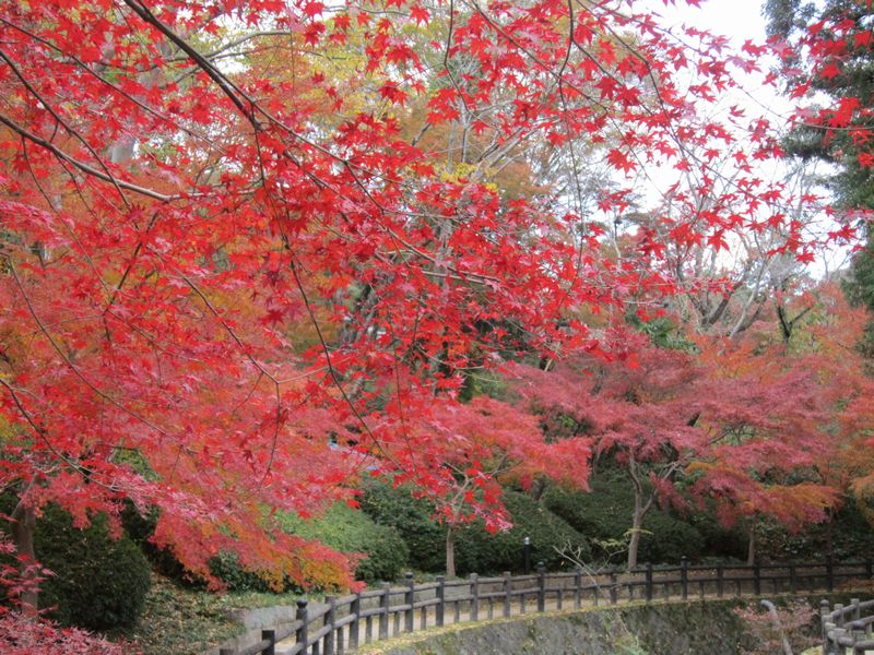 紅葉   by   (ナベサダ)_f0053885_2036535.jpg