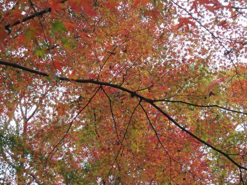 紅葉   by   (ナベサダ)_f0053885_20372813.jpg