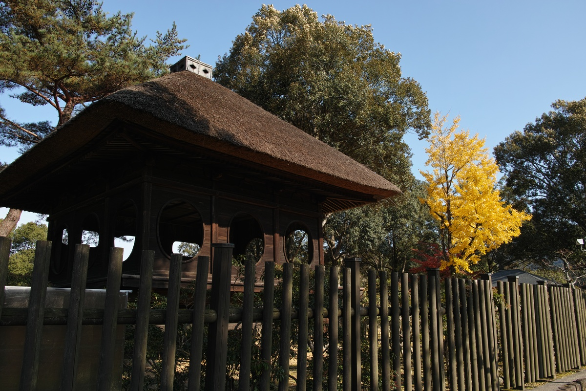 「半年振りの奈良公園」_a0133692_1637513.jpg