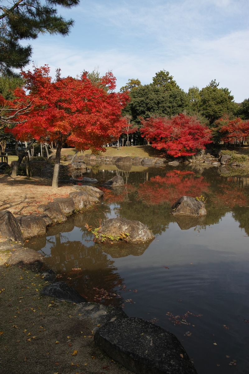 「半年振りの奈良公園」_a0133692_16385833.jpg