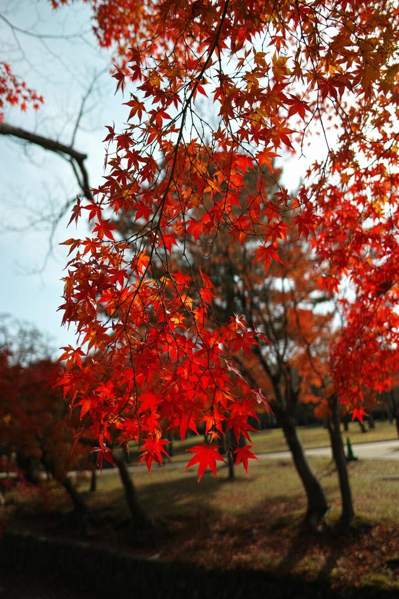 「半年振りの奈良公園」_a0133692_16434543.jpg