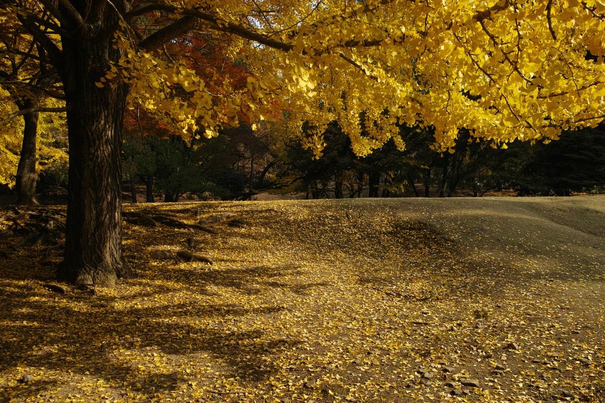 「半年振りの奈良公園」_a0133692_16503022.jpg