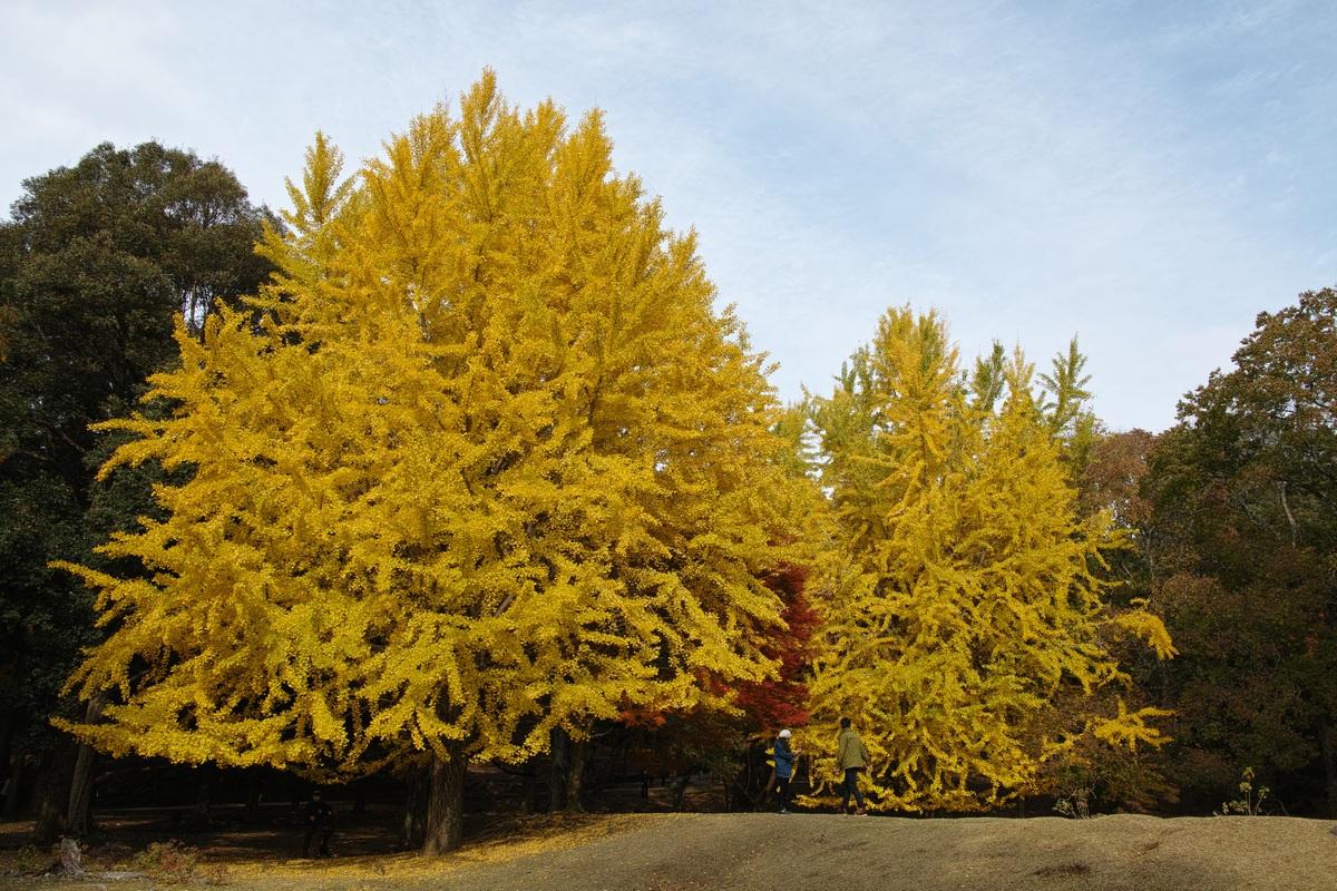 「半年振りの奈良公園」_a0133692_16513021.jpg
