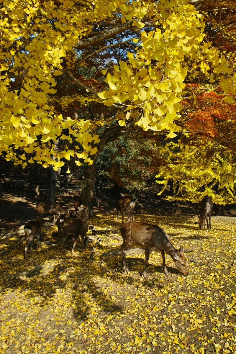 「半年振りの奈良公園」_a0133692_1710019.jpg