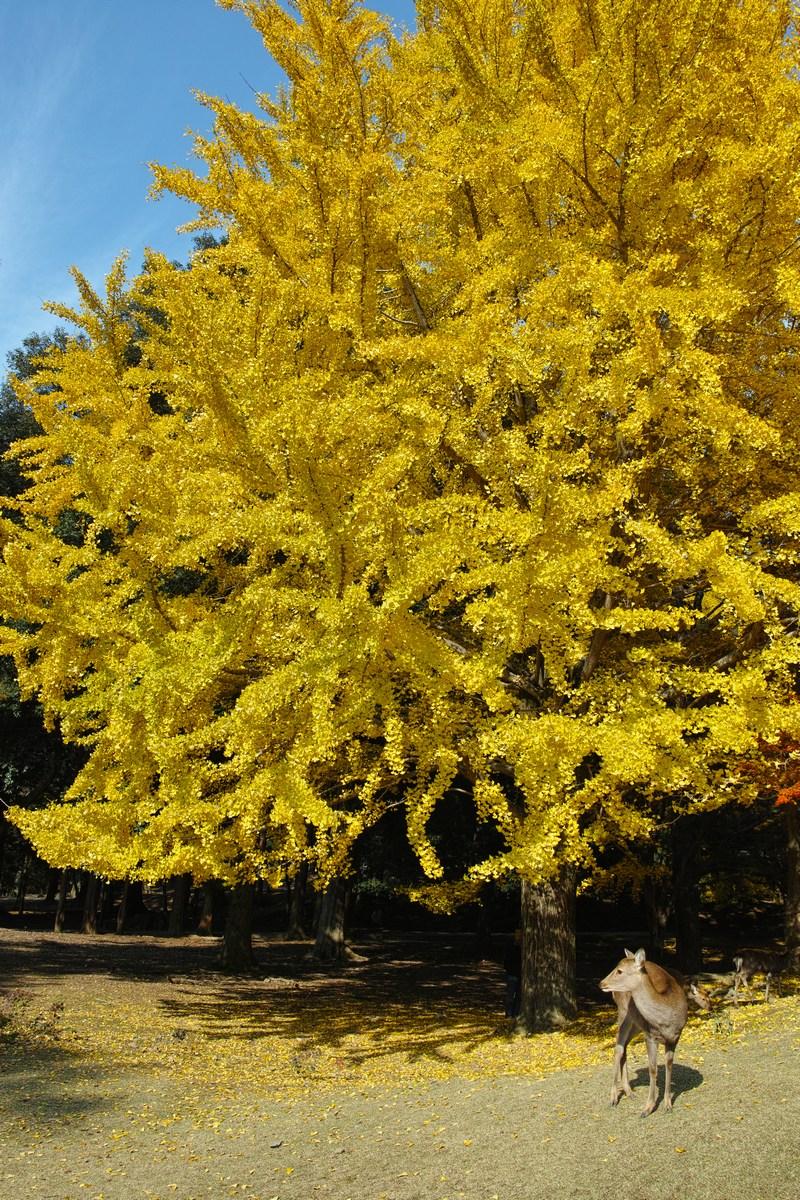 「半年振りの奈良公園」_a0133692_1763447.jpg