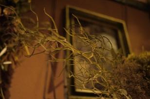 ②ふりかえって、、「フボーと植物展 白Ⅱ」_f0226293_12452380.jpg