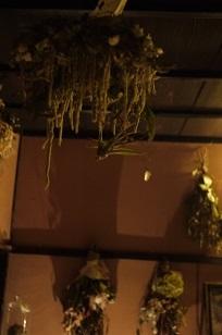 ②ふりかえって、、「フボーと植物展 白Ⅱ」_f0226293_128211.jpg
