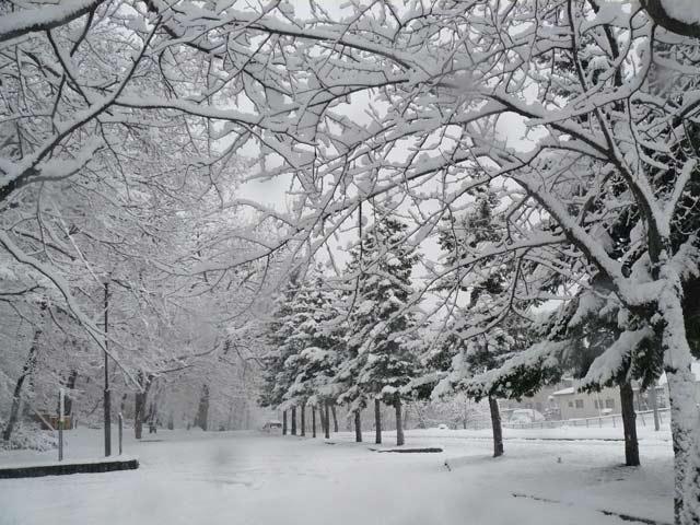 雪景色_d0162994_8412095.jpg