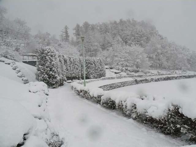 雪景色_d0162994_8414623.jpg